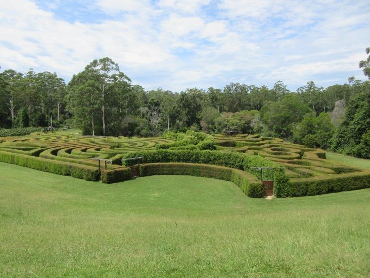 Bago Winery maze, NSW, Australia