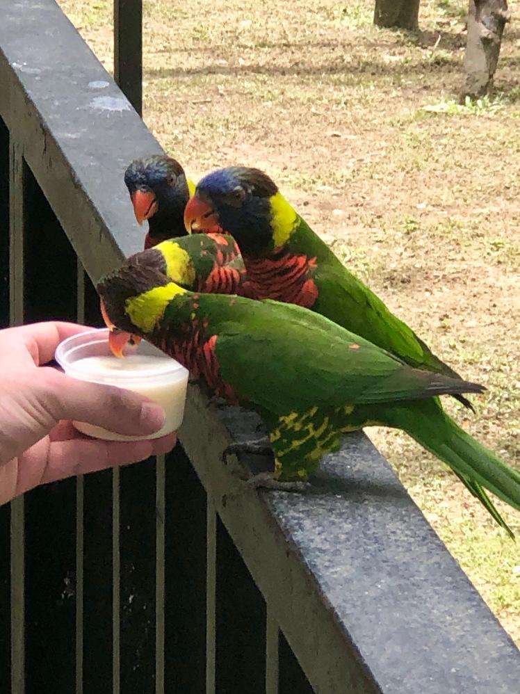 birdPark3